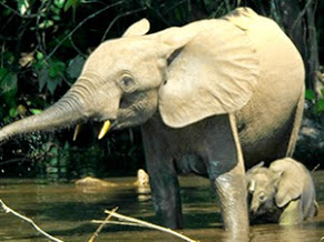 okomu-national-park-rainforest-elephants